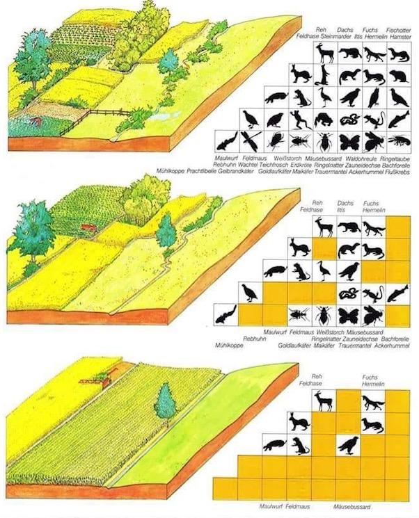 suolo e biodiversitc3a0